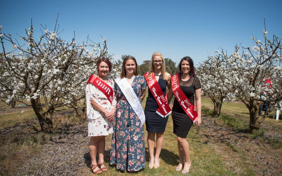 Cherry Queens introduced at Cherry Blossom Long Lunch